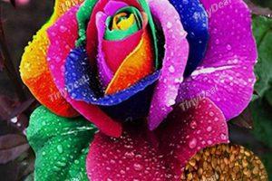 Produktbild von 10pcs bunte Rosen-Blumen-Pflanzen-Samen-Geschenk für Freunde