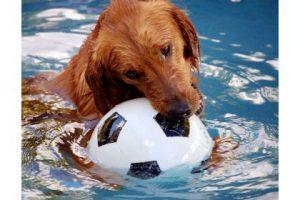 Produktbild von Hundespielzeug bis zu 60% reduziert